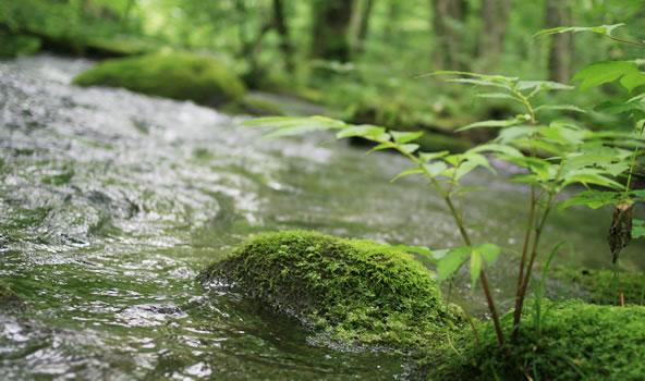 夏の奥入瀬渓流、苔パラダイス(青森県十和田市奥入瀬)