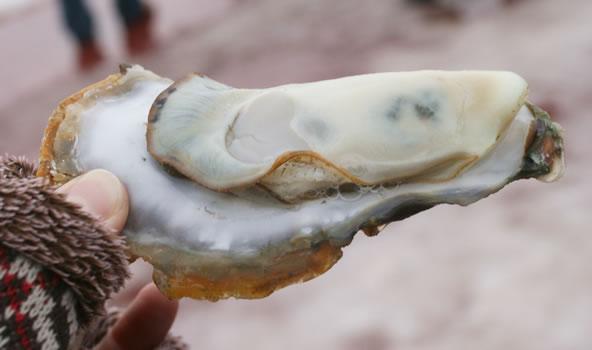 松島かき祭りの焼き牡蠣(宮城県松島市)