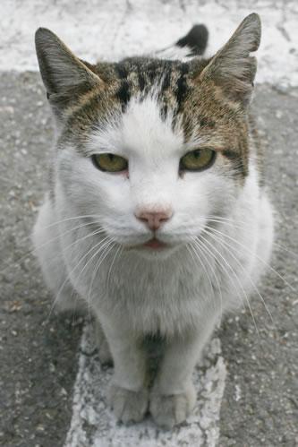 セングレアの野良猫さん(マルタ共和国)