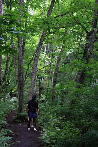 奥入瀬の森。緑が気持ち良い