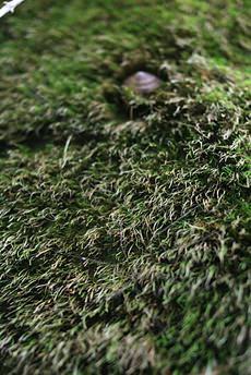 髪の毛風苔