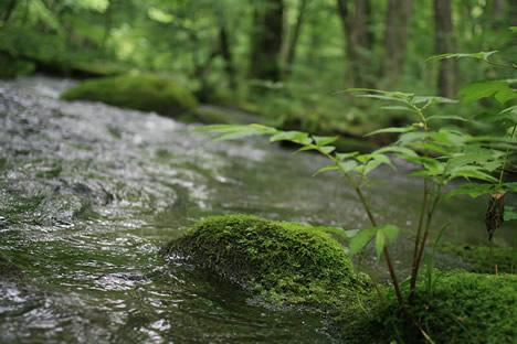 苔玉と奥入瀬渓流