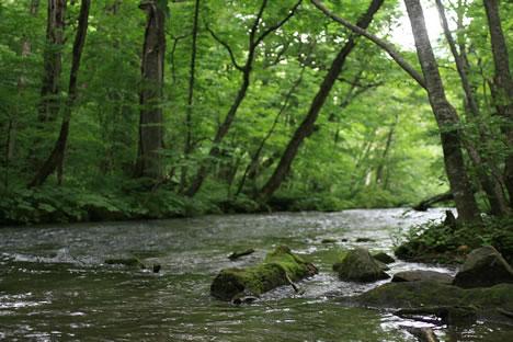 奥入瀬渓流。夏の絵はがきみたい。