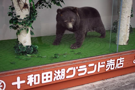 十和田湖グランド売店のくま