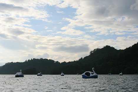 十和田湖: スワン大量出動中