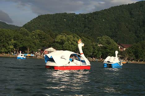 十和田湖: キング(クイーン?)スワン