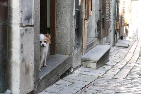 チェスキークルムロフの民家から外を覗く犬