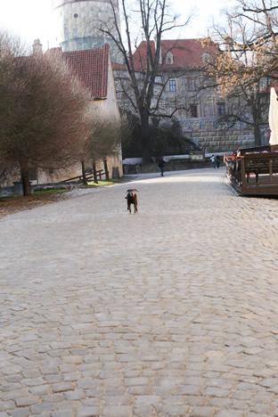 クルムロフ城で走る犬