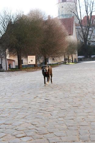 クルムロフ城で出迎える犬