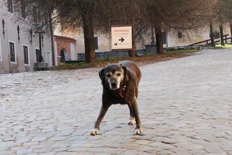 クルムロフ城で踏ん張る犬