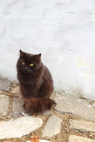 チェスキークルムロフで出会ったもじゃもじゃ黒猫