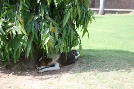 木陰で休憩する犬