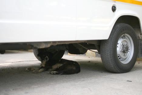 車の下にも犬