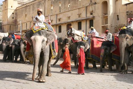 インド・ジャイプル郊外のアンベール城で並ぶ象のタクシーたちその2