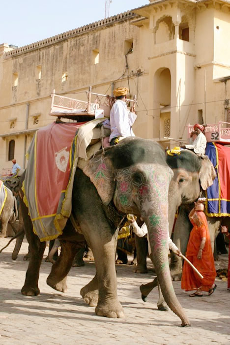 インド・ジャイプル郊外のアンベール城のお化粧した象