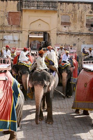 インド・ジャイプル郊外のアンベール城象乗り場から見える象