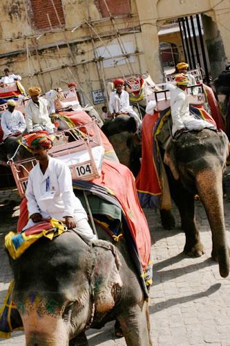 インド・ジャイプル郊外のアンベール城象乗り場から見える象その2