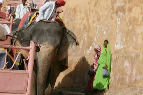 インド・ジャイプル郊外のアンベール城にて象タクシーの通り道にいたきれいなサリーを来た女性