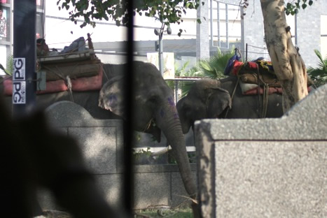ニューデリーにいた2頭の象