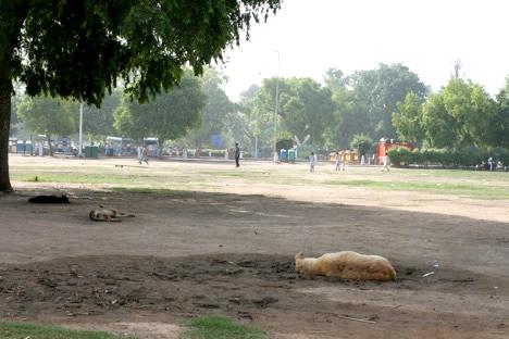 インド門横で昼寝する犬たち