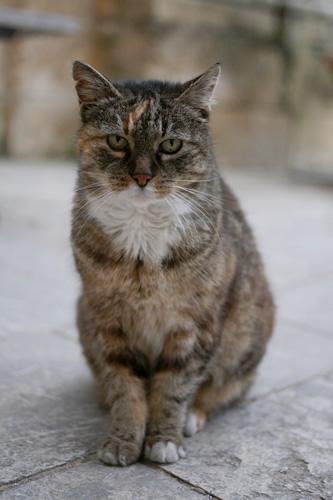 イムディーナの出迎え猫夕方バージョン