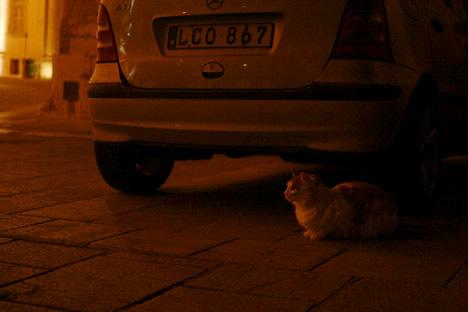 夜のイムディーナ車のそばにいる猫
