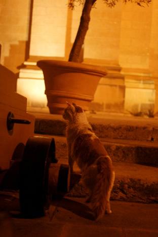 夜のイムディーナで出会った猫