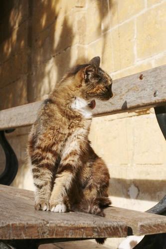 イムディーナのあくび猫