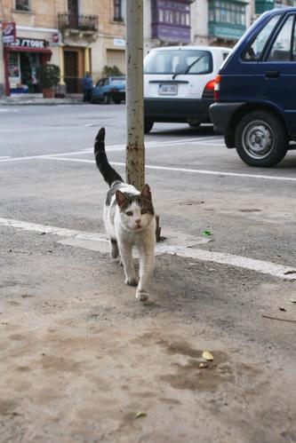 マルタ・セングレアで出迎えてくれた猫
