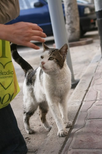 マルタ・セングレアのおねだり猫