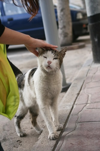 マルタ・セングレアの猫を撫でる