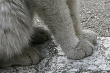 マルタ・セングレアの猫の手
