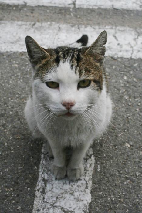 マルタ・セングレアの猫凝視