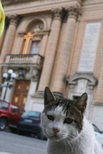 マルタ・セングレアの猫うんざり