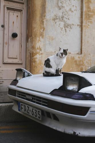 マルタ・セングレアの車上にいた野良猫