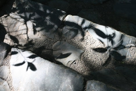 石段に落ちた葉っぱの影