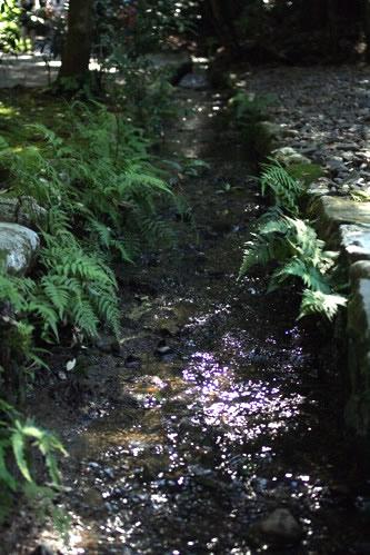 水辺に生息する苔