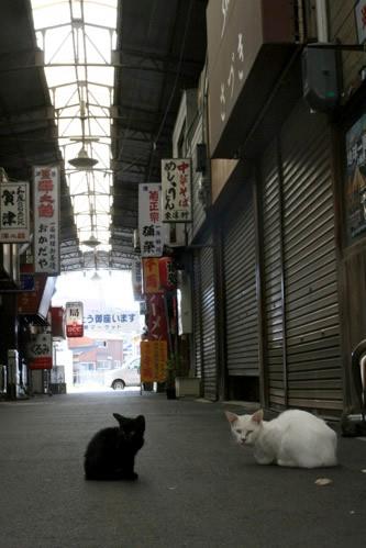 伊勢市駅前商店街の猫たち