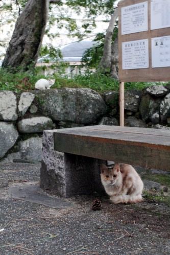 松坂城の野良猫さん