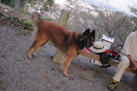 松坂城址公園に散歩に来ていた犬