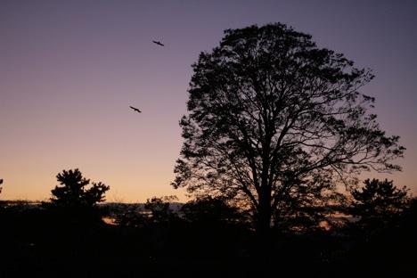 松坂城の黄昏時