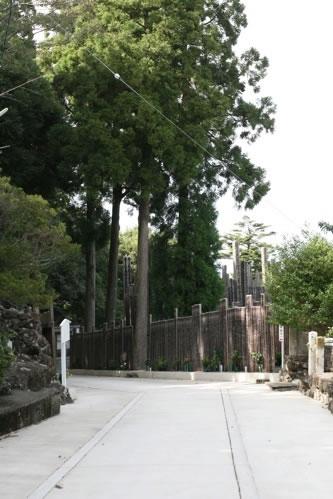 見えてくる卒塔婆の供養林