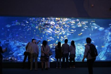 鳥羽水族館エントランスホールの大水槽