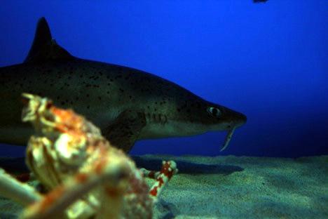 鳥羽水族館の目が怖いサメ