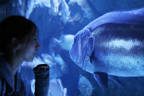 N氏と巨大魚@鳥羽水族館