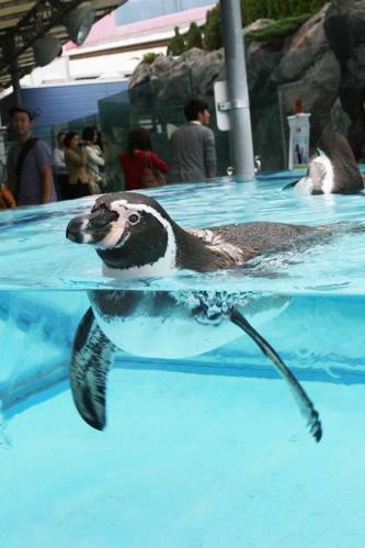 鳥羽水族館ペンギン営業部長の挨拶