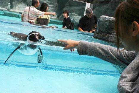 鳥羽水族館の、動じないペンギン営業部長