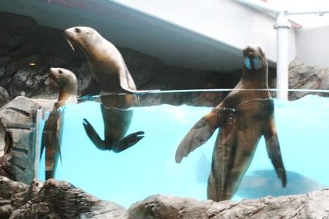 鳥羽水族館アシカコンビ